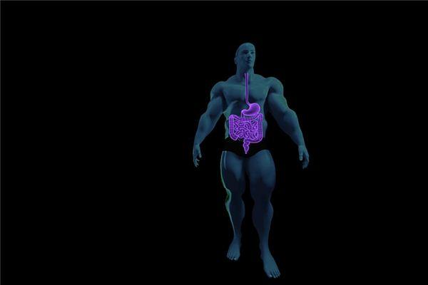 梦见肠胃是什么意思