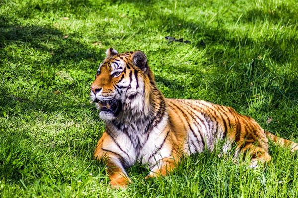 梦见虎变人是什么意思
