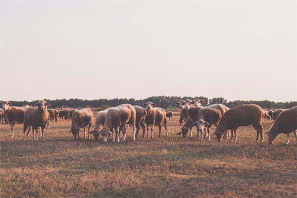 梦见牛羊是什么意思