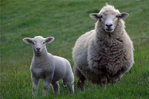 梦见羊头是什么意思