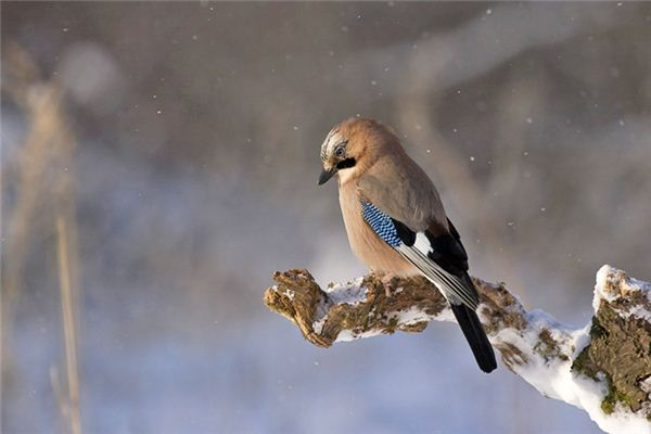 梦见鹏鸟是什么意思