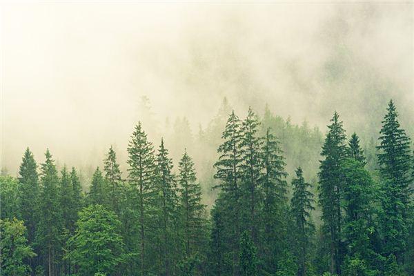 梦见绿树是什么意思