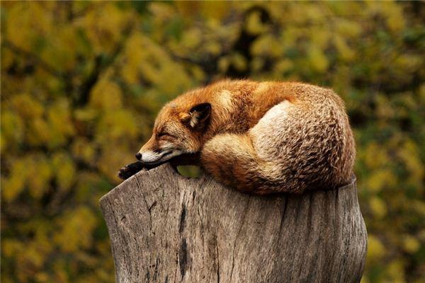 梦见动物是什么意思