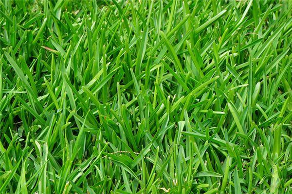 梦见种草是什么预兆