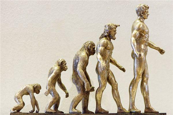 梦见进化是什么意思