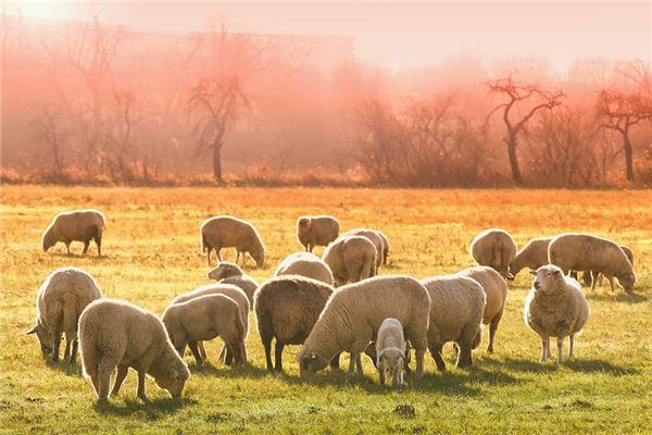 梦见剪羊毛是什么意思