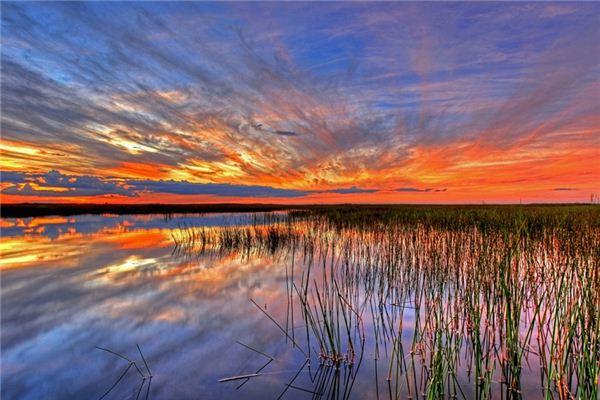 梦见沼泽是什么意思