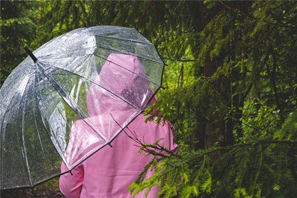 梦见下雨买伞