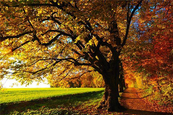 梦见各种树木是什么意思