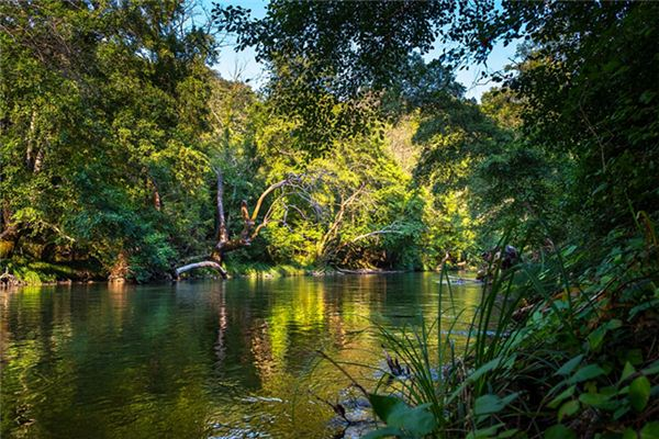 梦见热带雨林是什么意思