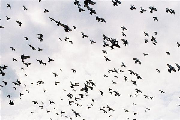 梦见百鸟群聚是什么意思