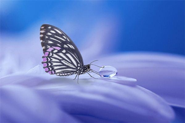 梦见蝴蝶死亡是什么意思