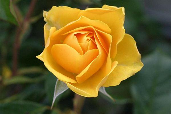 梦见黄色花朵是什么意思