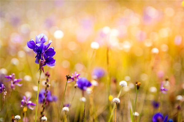 梦见兰花发芽是什么意思