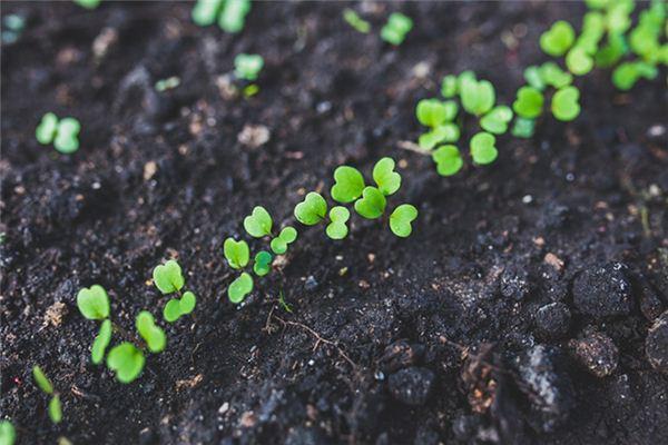梦见种子发芽是什么意思