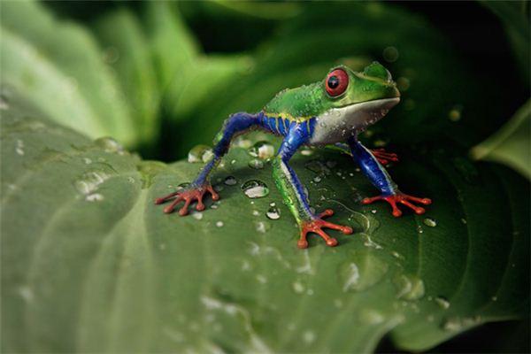 梦见蛇吃青蛙是什么意思