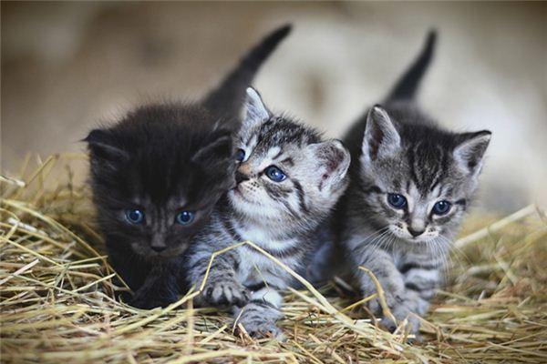 梦见猫生小猫是什么意思