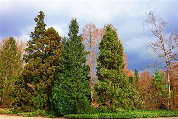 梦见爬上松树是什么意思