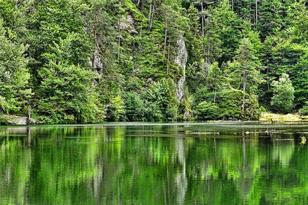 梦见山林草木是什么意思