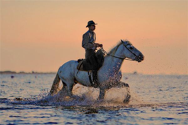 梦见骑马奔驰是什么意思