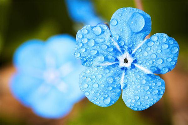 梦见春天细雨是什么意思