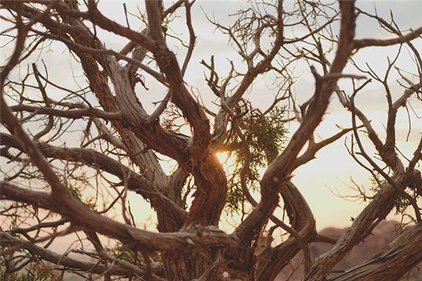 梦见树干残枝是什么意思