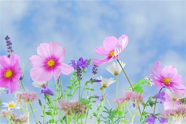 梦见各种花开是什么意思