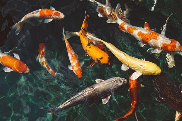 梦见送鱼捡鱼是什么意思