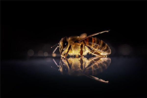 梦见蜜蜂追我是什么意思