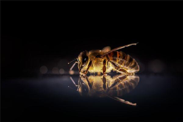 梦见蜜蜂蛰自己