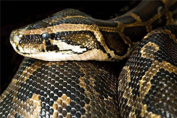 梦见打死大蛇是什么意思