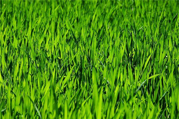 梦见割草是什么意思