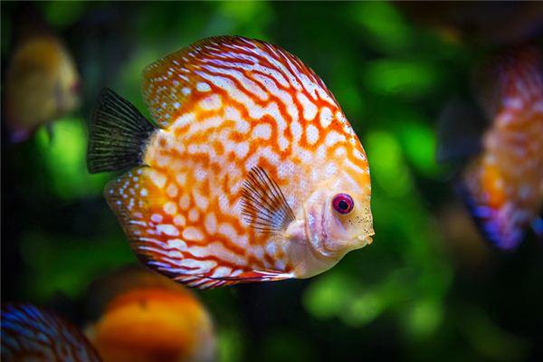 梦见鱼在水里游