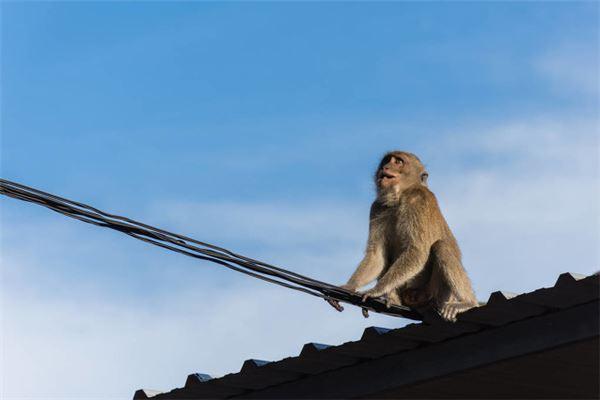 屬猴的今年60幾歲