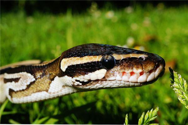 十二生肖蛇排第幾