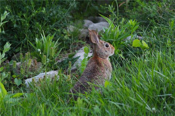 1999年属兔的是什么命