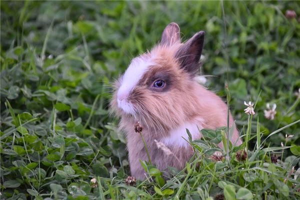 99年属兔男性格与脾气