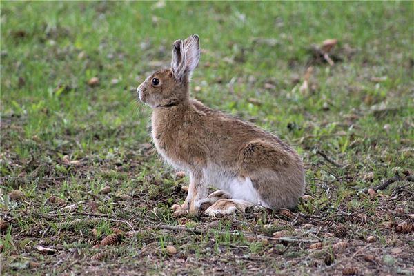 属兔男喜欢女人主动吗