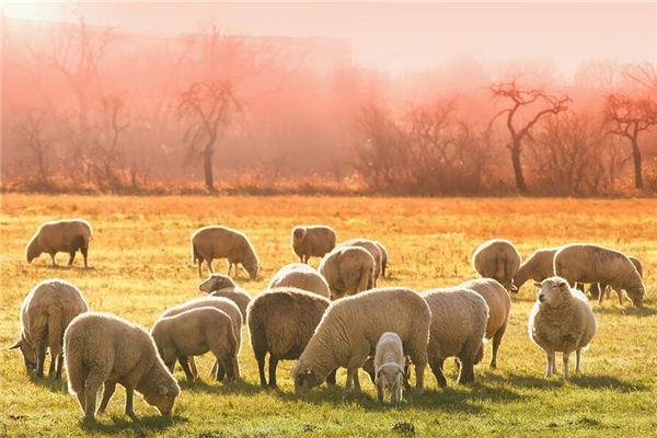 1979年属羊的哪个时辰最好