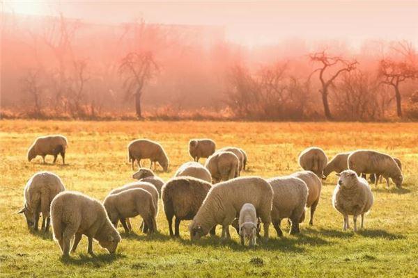 属羊的今年多大年龄