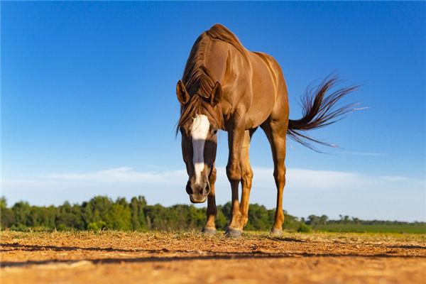 生肖属马的男人缺点