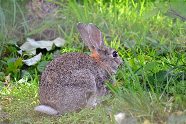 生肖属兔的人出生于哪一年
