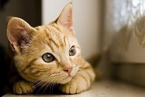 梦见猫是什么意思?做梦梦见猫好不好?图片