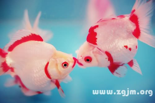 大奖娱乐平台金鱼