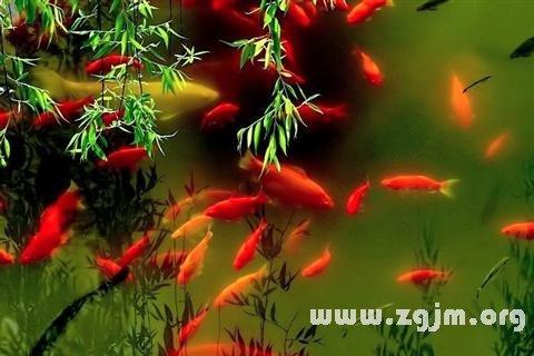 庄闲游戏红鱼