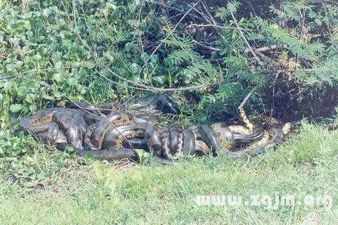 梦见一群蛇