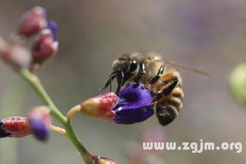庄闲游戏蜜蜂