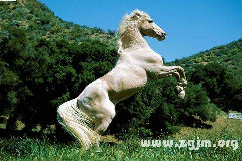 大奖娱乐平台马 马匹