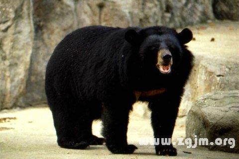 庄闲游戏狗熊
