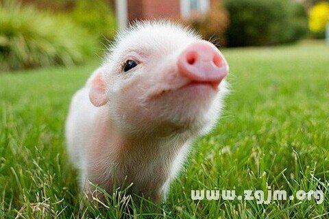 庄闲游戏小猪